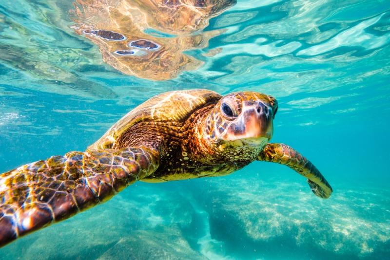 Turtle Beach X