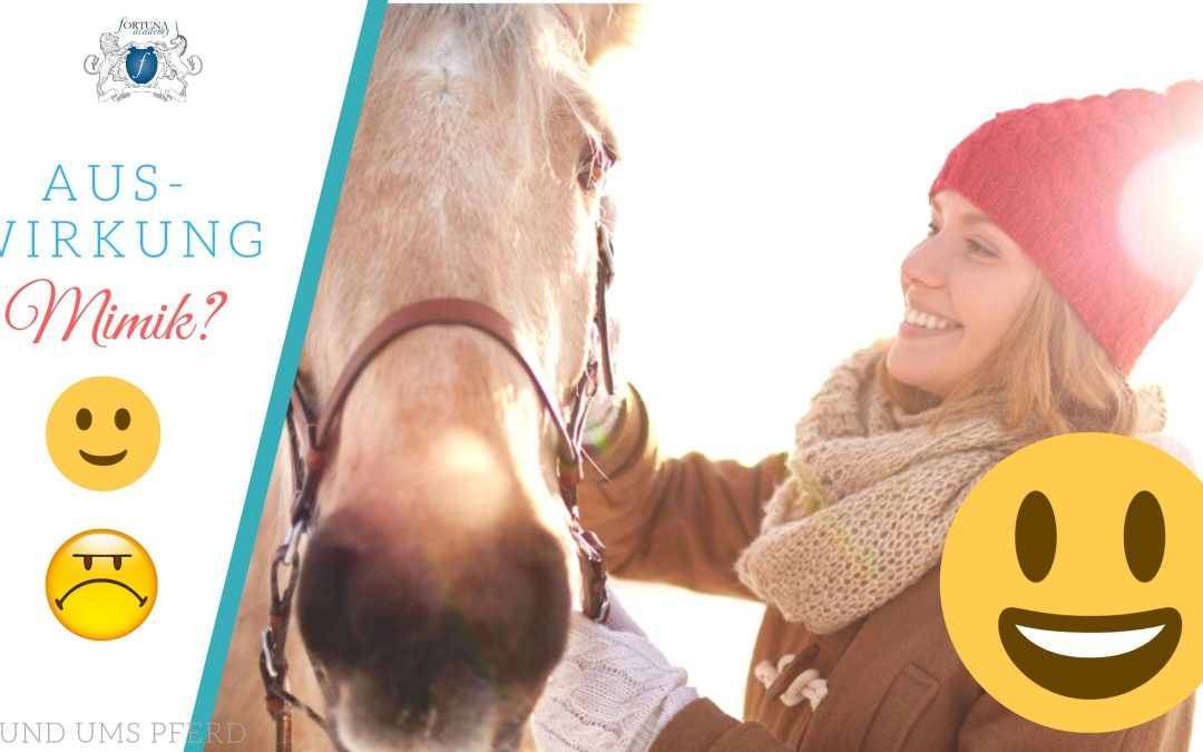 Deine Mimik beinflusst Dein Pferd