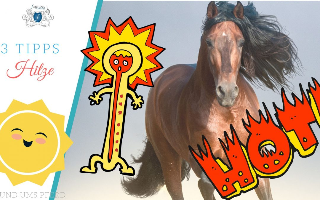 Sommerhitze Pferd