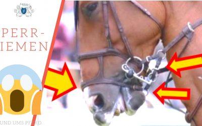 Sperrriemen Pferd